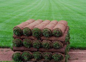 газон рулонный цена